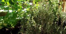 Gezond koken met verse tuinkruiden